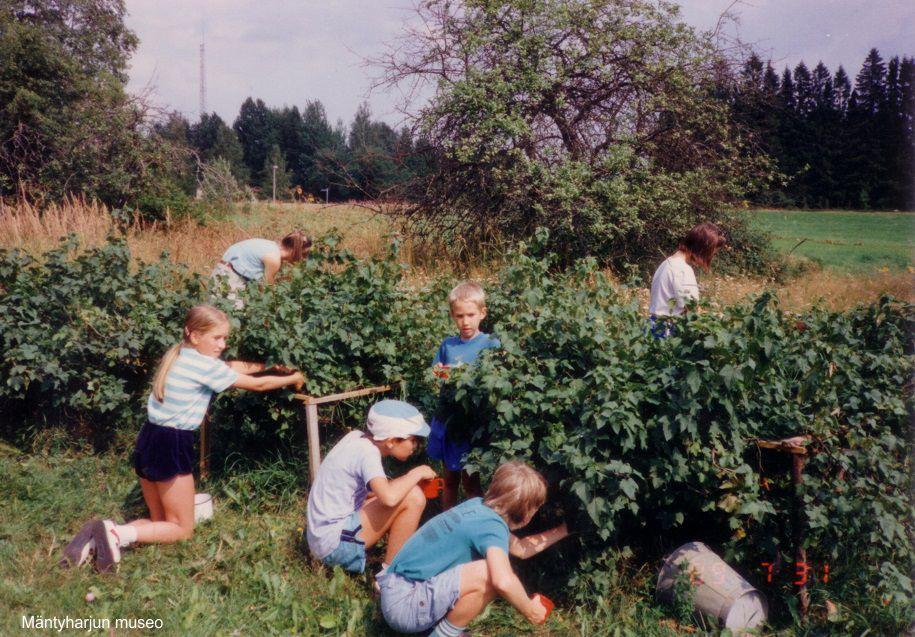 1990-luvulla-marjan-poimintaa-rauhalassa