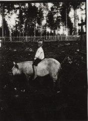 Poika ratsastaa sialla 1920-luvulla Mäntyharjussa. Kuva: Mäntyharjun museo.