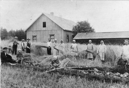 Rukiin leikkausta vuonna 1926. Kuva: Mäntyharjun museo.