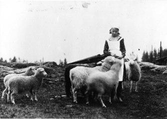 Tyttö ja lampaat 1930-luvulla. Kuva: Mäntyharjun museo.