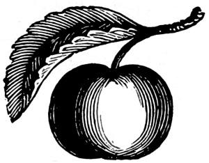 omenavarkaissa