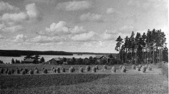 rauhala-1930-luvulla-pulkarannasta-katsottuna-kuusitielta-kuva-heli-saarni-2